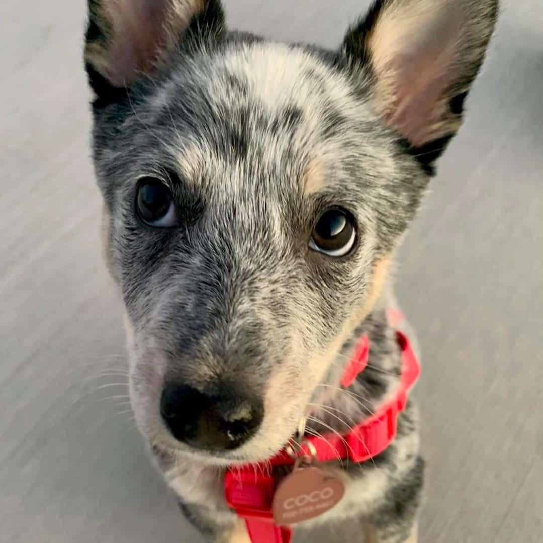 Brooke's dog Coco